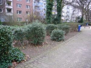 Hortensienbeet250214-002
